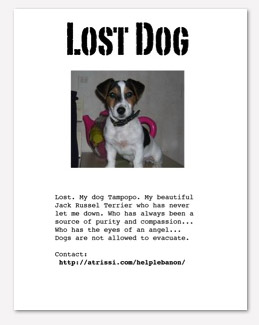 pet tribe lost dog 259x325