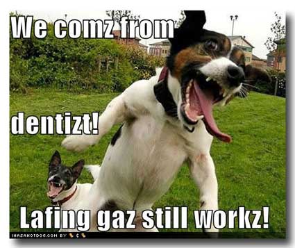 Image Result For Teach Yourself Dog