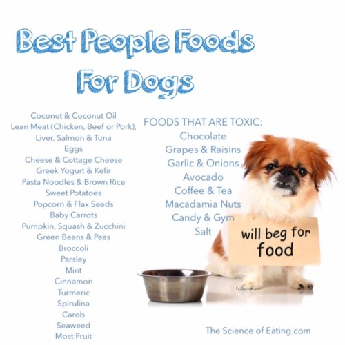 Healthiest Foods For dog list