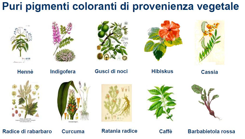 Elenco piante tintorie