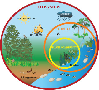 Ecological Concern: Different Types of Ecosystems Found on ...