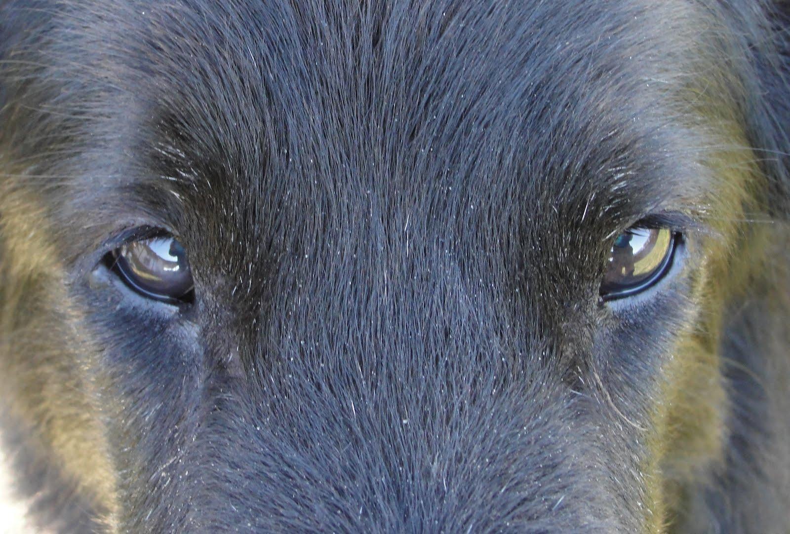 http://4.bp.blogspot.com/-XJcR-cf3XkE/T0boY_-0H9I/AAAAAAAAMYo/IKxuMZqgQok/s1600/Sadie%2527s%2Beyes.jpg