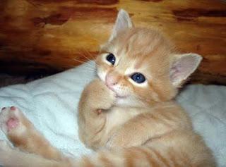 Imagenes de gatitos tiernos