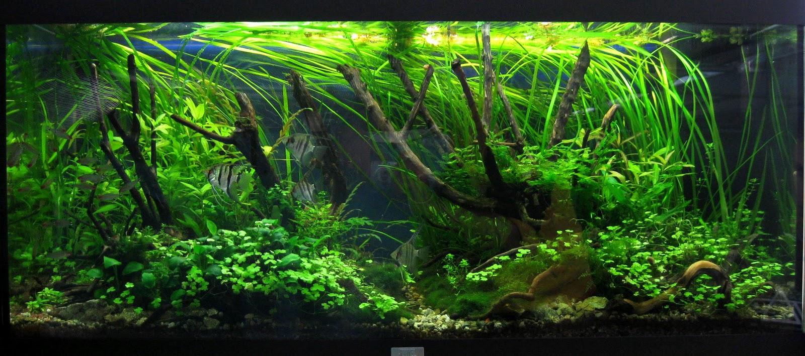 The green aquarium un acquario sano e bello introduzione for Legni per acquario