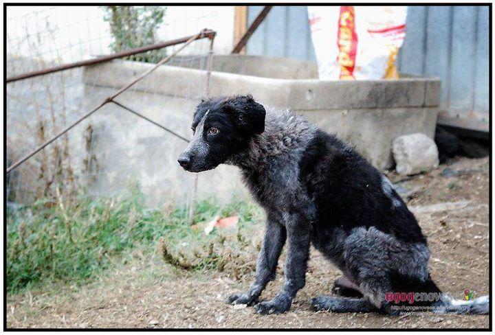 Lega del cane teramo bellante zac e red buffi cuccioloni