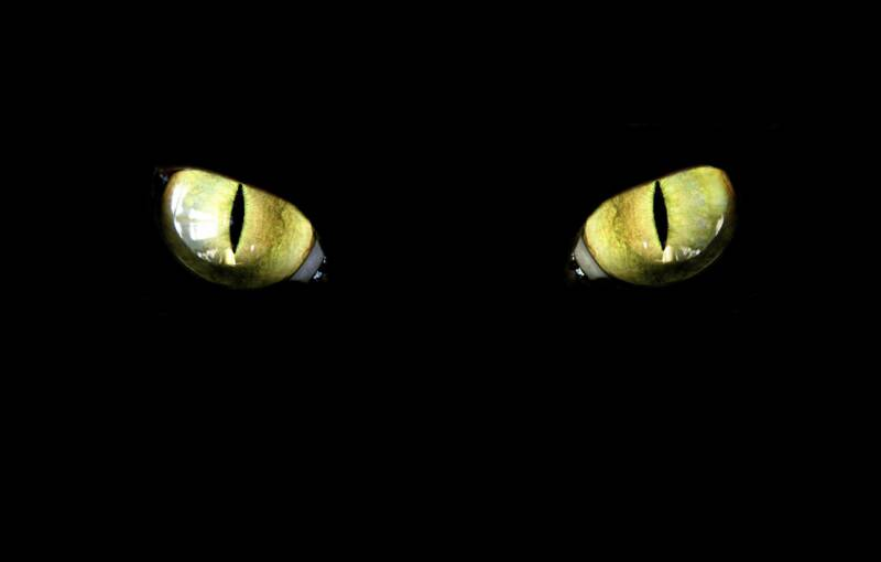 фото желтые глаза у кота