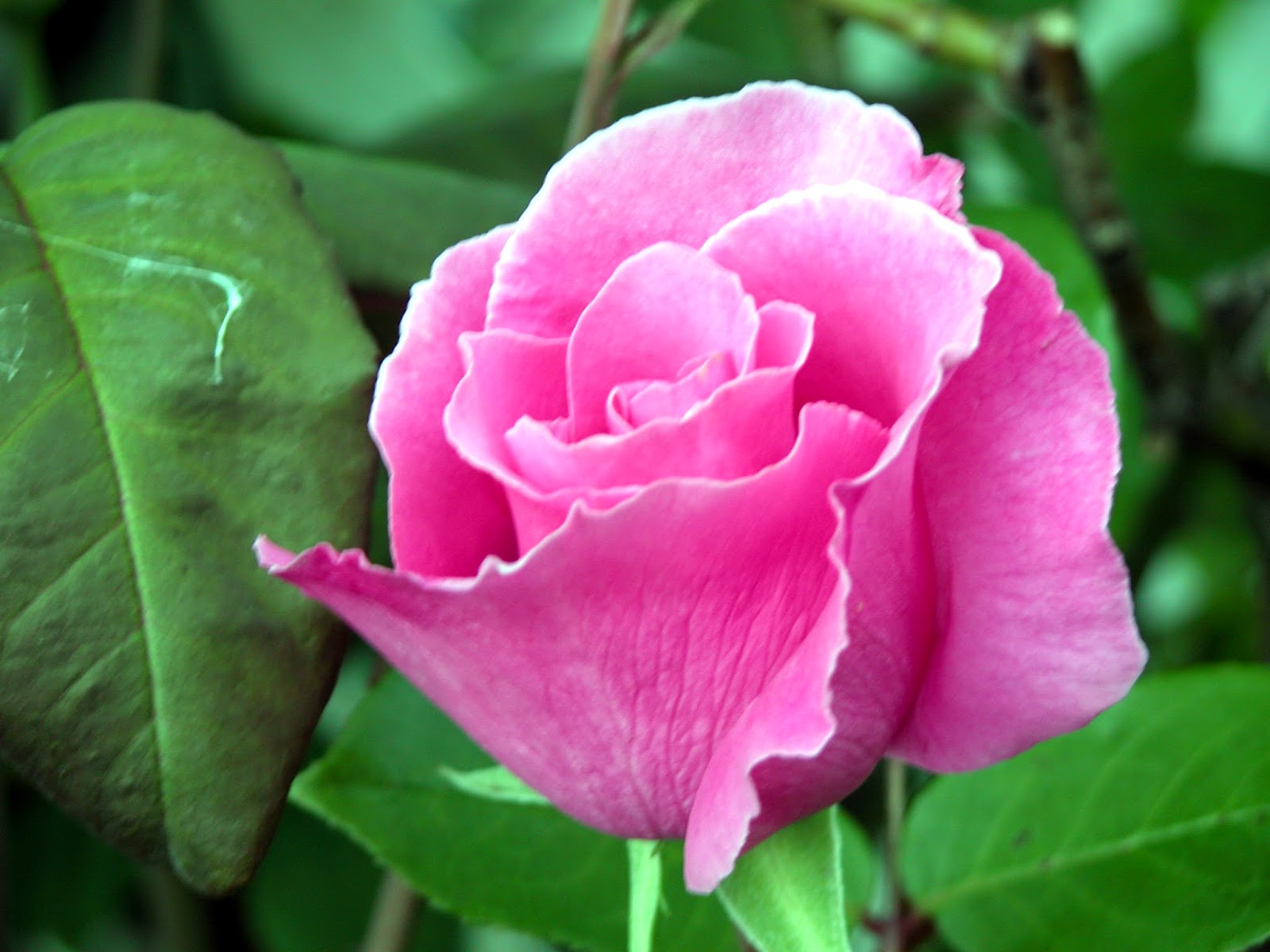 Beautiful And Amazing Flowers From All Over The World Nice Pictures Images Photos