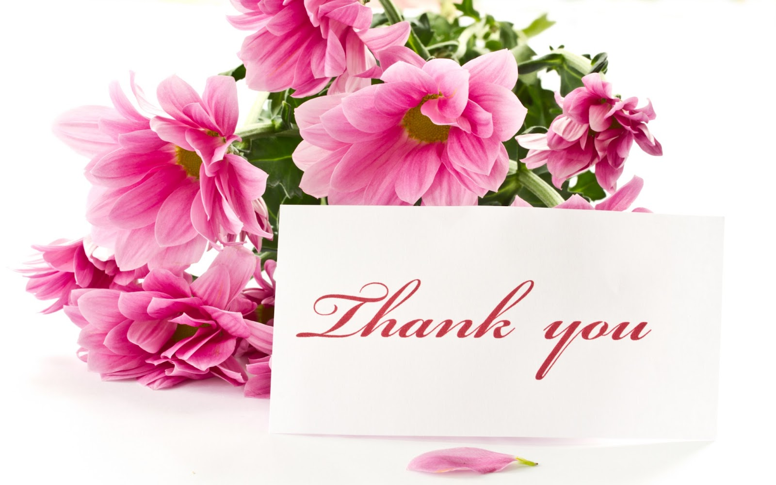 Thank You HD Images with Wishes