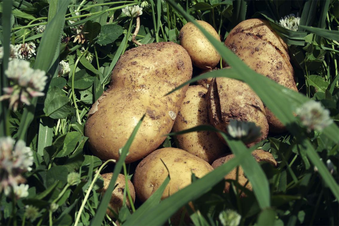 Asturias con ni os el bosque comestible est de vuelta for Viveros en asturias