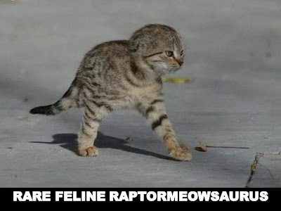 Rare Feline Raptormeowsaurus