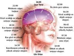 Uyku pozisyonuna göre kişilik