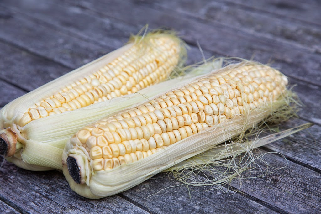 tuore maissi
