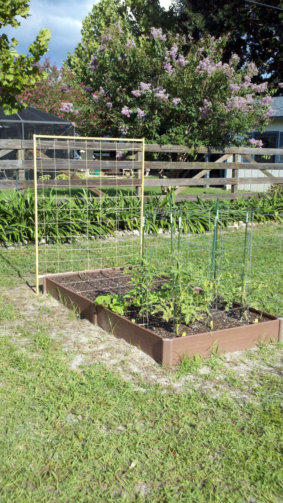 Vegetable gardening in sw florida the beginning of a passion - South florida vegetable gardening ...