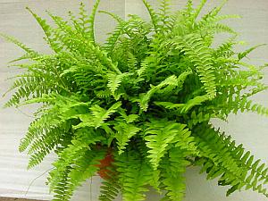 Plantas, Riego, Cuidados