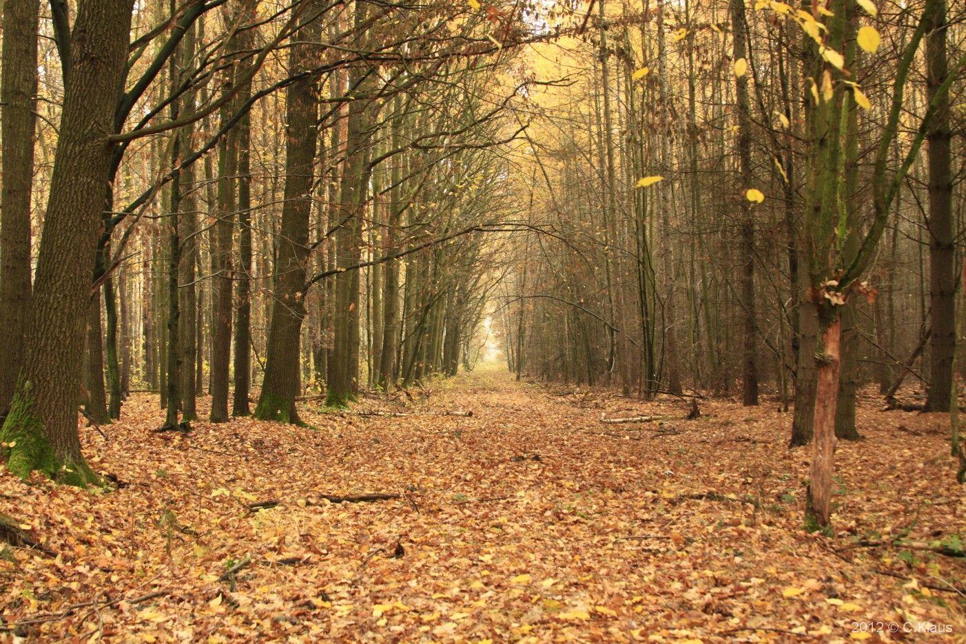 Meine Gedichte: Spu00e4therbst - November im Wald