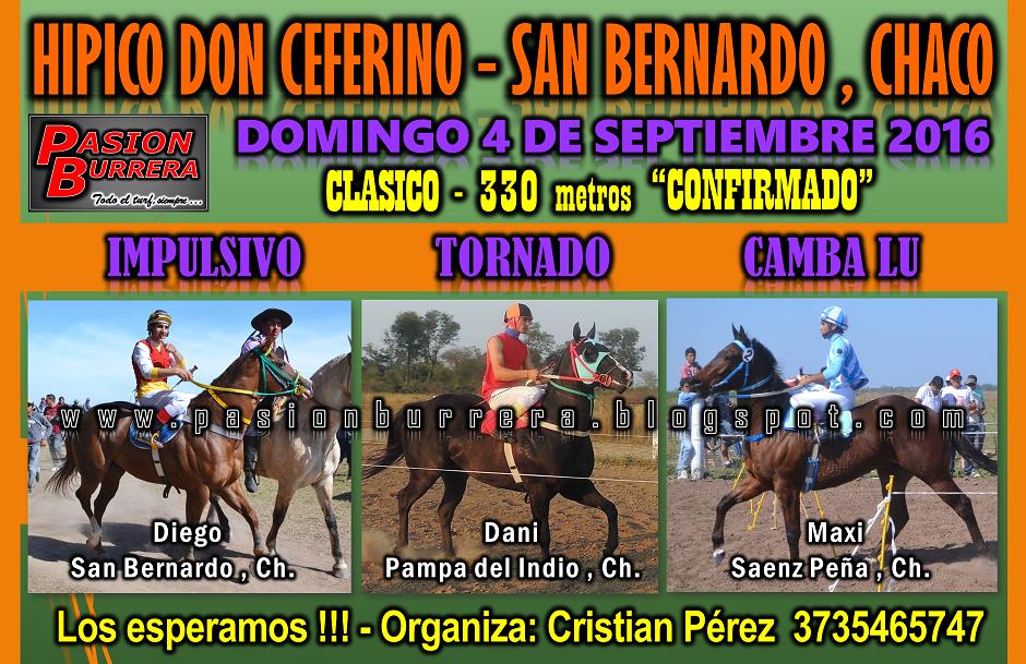 SAN BERNARDO - 330