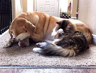 Facepalm Katze und Hund