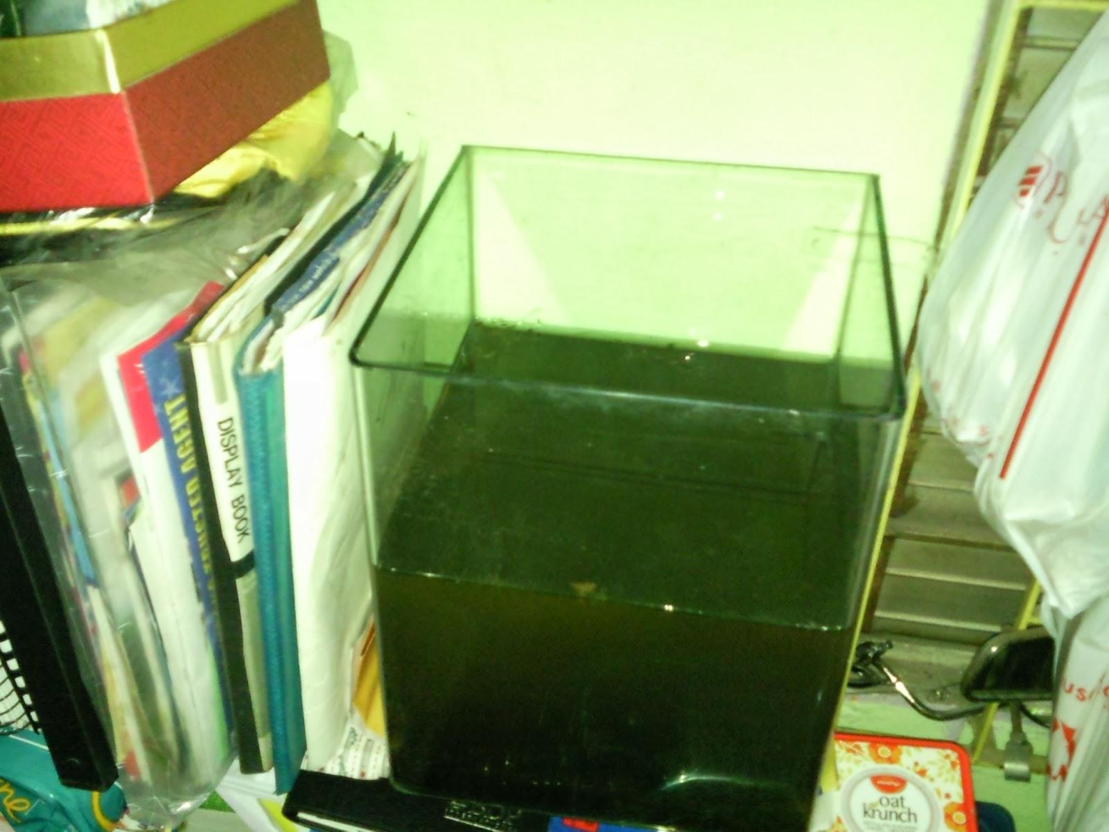 ... Fish Tanks And Aquarium CRS: Aquarium Home Multiple Fish Tanks Setup