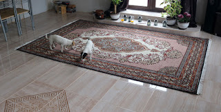 New rug rolled out in position; lovely!