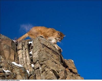 Gambar Bagus Singa