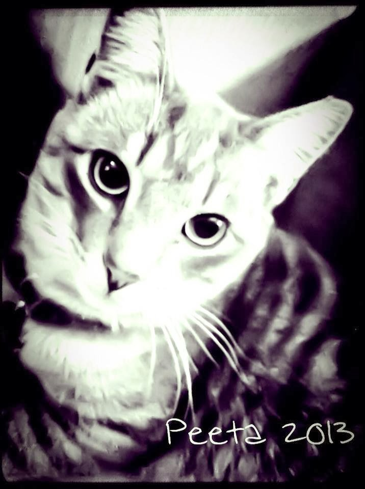 Happy Wednesday Cat Cat i 39 m Purrfectly Happy