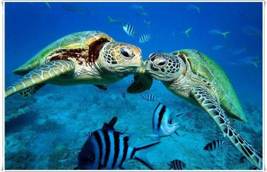 Cute sea turtle a2z wallpaper - Cute turtle pics ...