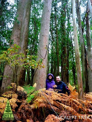 Dr. Dean Nicolle, Eucalyptus Botanist and Researcher, Director Currency Creek Arboretum, the most complete and biodiverse eucalypt collection in the world and Dr Annett Boerner, Max Planck Institute for Biogeochemistry visit the mixed wet tall eucalypt forest of Northern Spain and Portugal / Dr. Dean Nicolle, Botánico de Eucaliptos e Investigador, Director del Arboreto de Currency Creek, la coleccion mas completa y biodiversa de eucaliptos del mundo y Annett Boerner del Instituto Max Planck de Biogeoquimica visitan los bosques altos humedos mixtos de eucalipto del Norte de España y Portugal / Gustavo Iglesias Trabado / GIT Forestry Consulting, Consultoría y Servicios de Ingeniería Agroforestal, Galicia, España, Spain / Eucalyptologics, information resources on Eucalyptus cultivation around the world / Eucalyptologics, recursos de informacion sobre el cultivo del eucalipto en el mundo