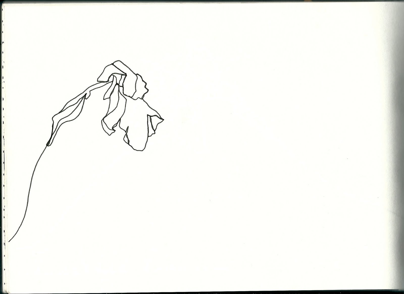 Continuous Line Drawing Of A Flower : Design practice what is a line sketchbook continuous