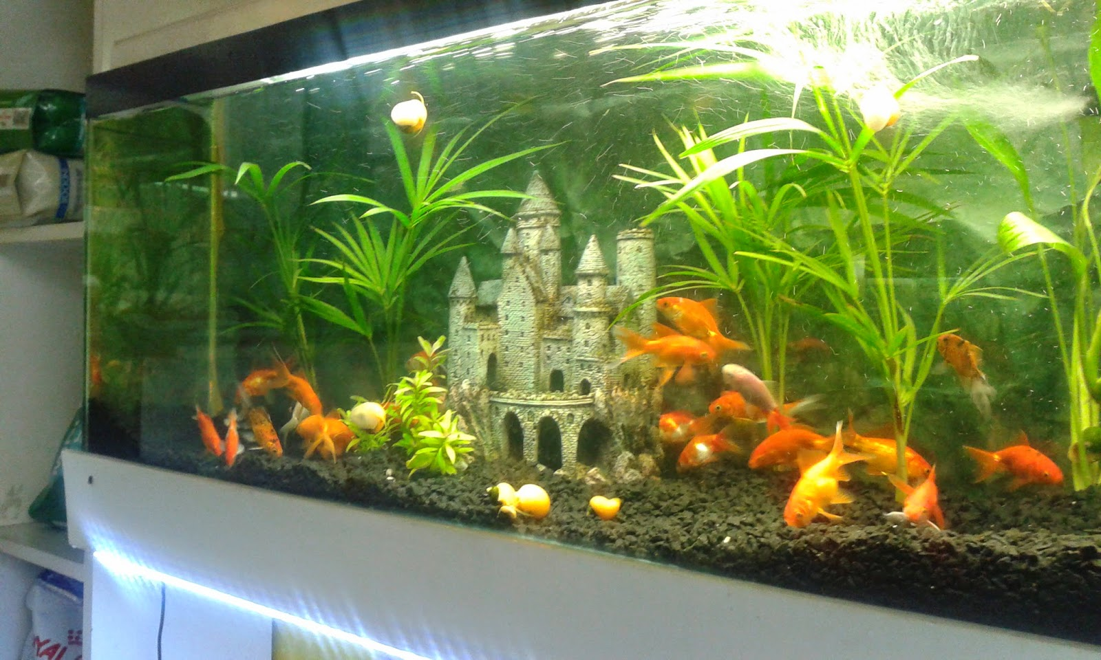Ideas para acuarios ideas de disenos for Peces de acuario