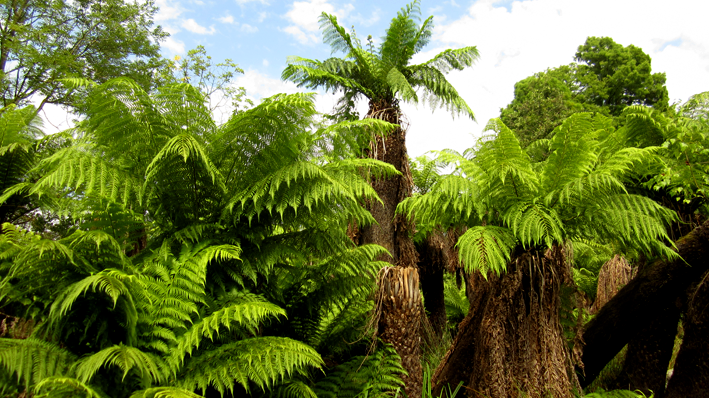 Pairi Daiza - fougère arborescentes - http://spicerabbits.blogspot.fr/