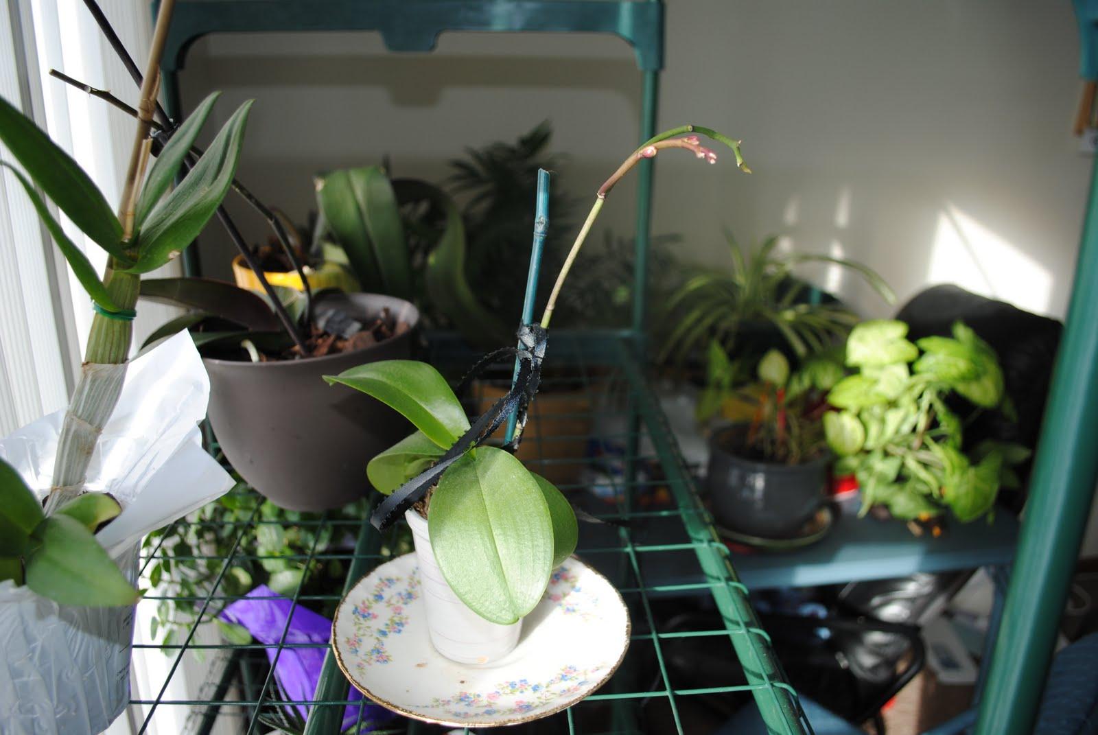 http://4.bp.blogspot.com/-XNR0-aXRr3E/TViIodBc-0I/AAAAAAAABKc/TSLy1y7Az5s/s1600/orchid%25252Bshoot%25252B2.JPG