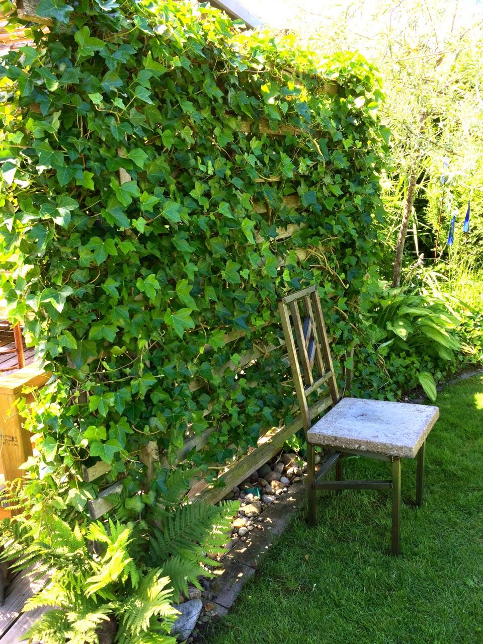 Cattis och eiras trädgårdsdesign: bygg skärmväggar/spaljéer som ...