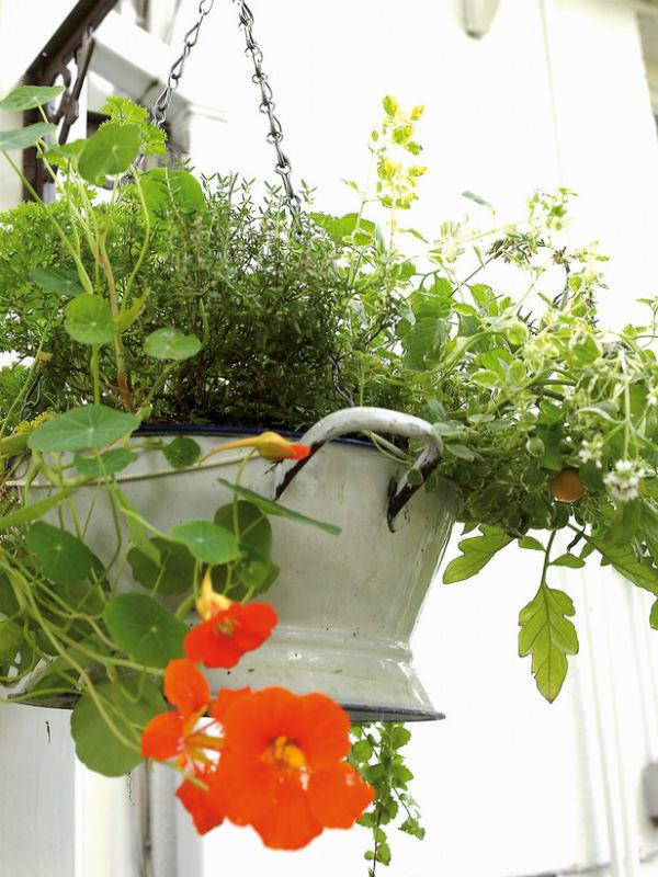 huerto en macetas colgantes vintage- kitchen-garden