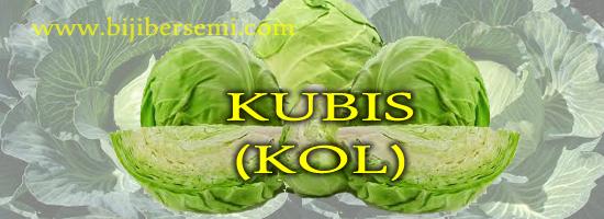 """""""kubis 图片""""的图片搜索结果"""