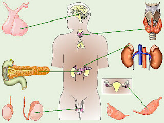 ENDOCRINOLOGY POWERPOINT PRESENTATIONS