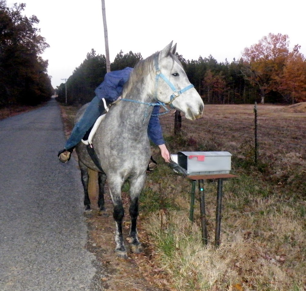 Equestrian Journey: Ride 81 - Checking Things Off - Video