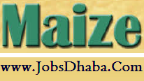 Directorate Of Maze Research, DMR Recruitment, JobsDhaba.Com, Sarkari naukri
