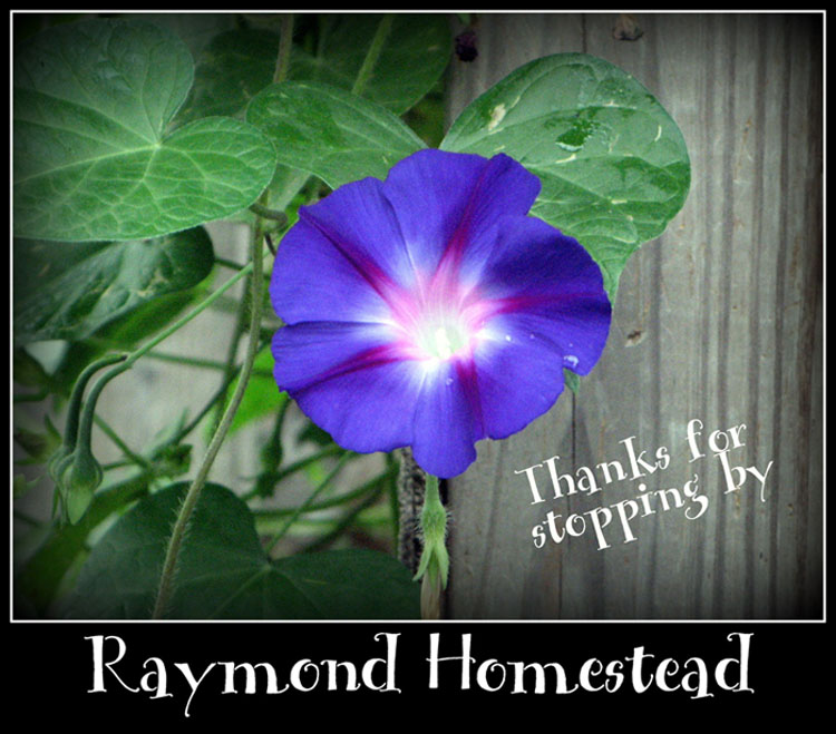 Raymondhomestead