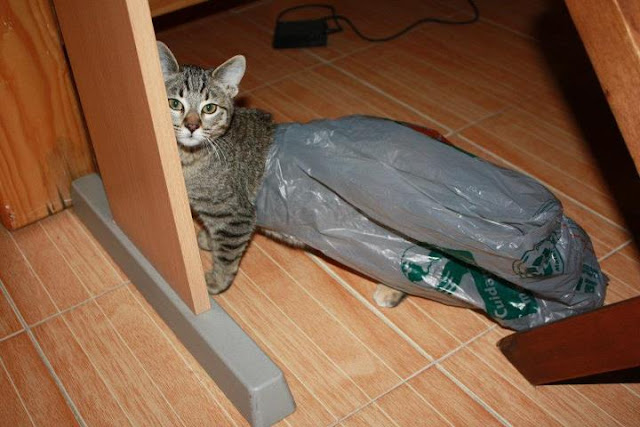 funny cat pictures, cat stuck on plastic bag