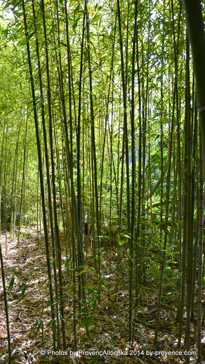 bamboo,parc,villa