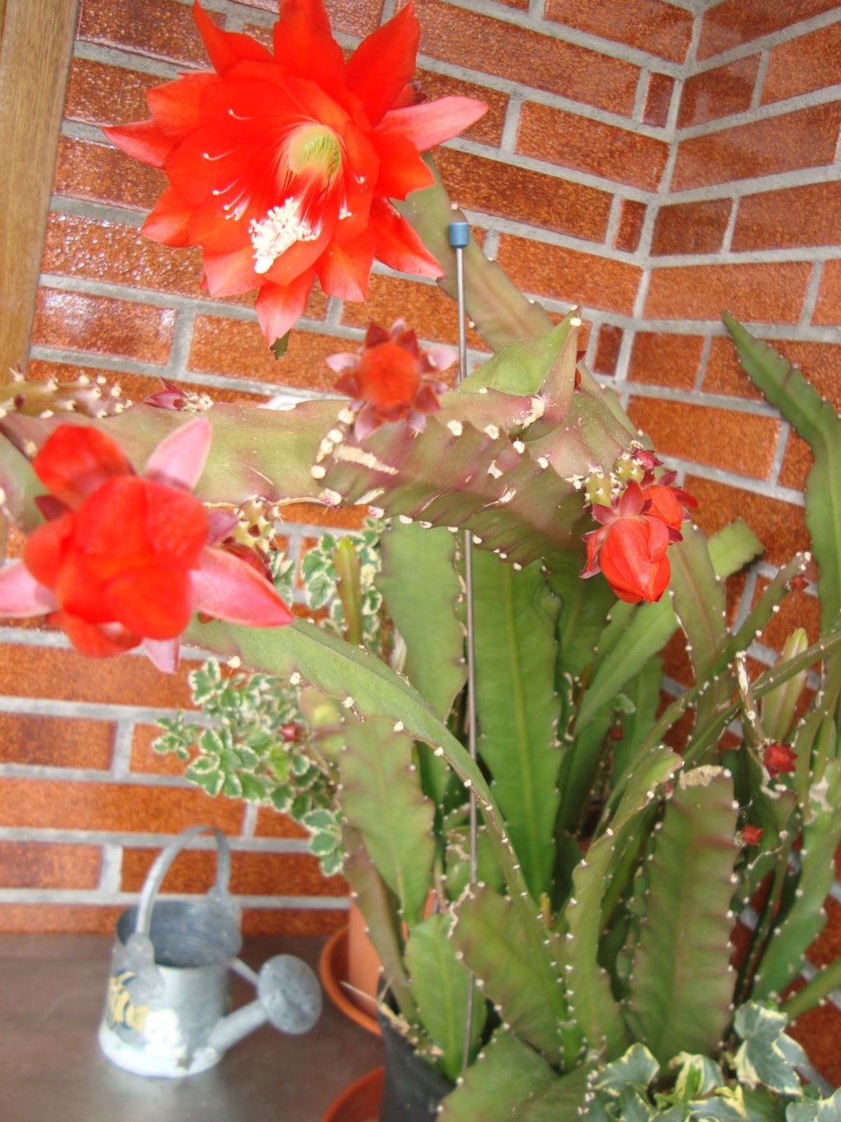 Floresamatxo todo sobre las flores consejos para cuidar for Santa teresita planta