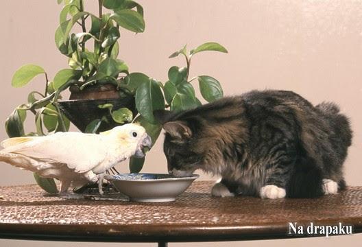 Kot i ptak w jednym domu – czy to możliwe?
