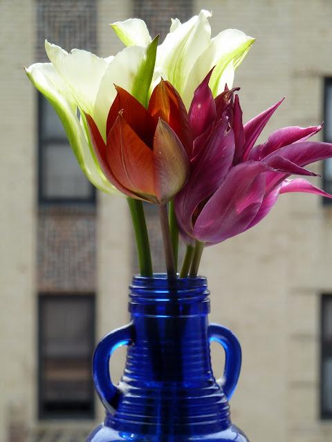 Brooklyn Grown tulip bouquet in window