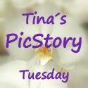 tinaspicstory