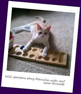 Inexpensive entertainment pets children