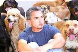 """""""Encantador de cães"""" na SIC"""