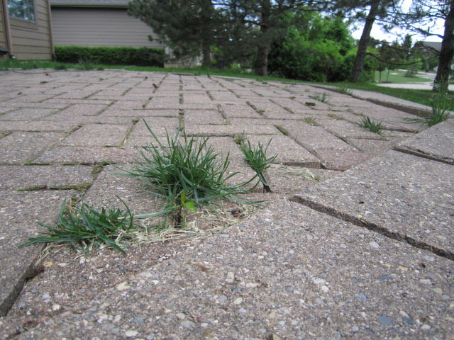 When Giving An Estimate On A Paver Patio Restoration, We Always Provide Cost  Options For The Customer To Consider. In This Particular Project, A Total  Patio ...