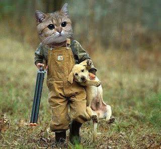 Gato caça cão