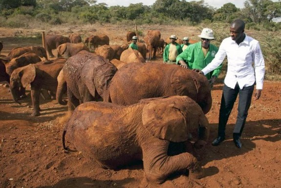Yaya Touré visits baby elephants at the David Sheldrick Wildlife Trust in Nairobi