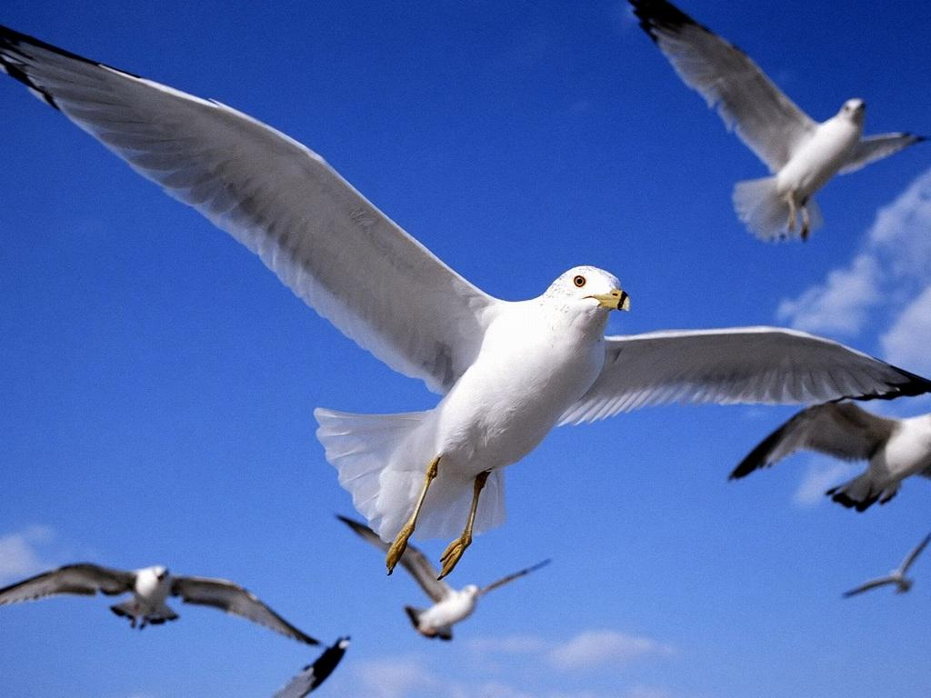 Flying Birds Funny Images